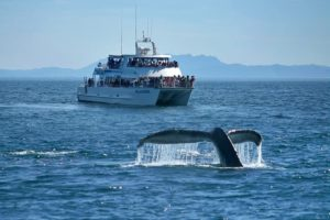 whale watching island packers channel islands national park