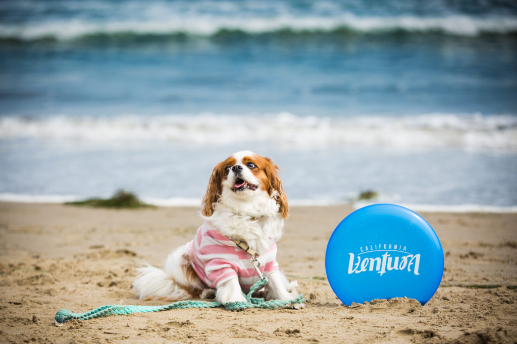 Dog with Ventura frisbee