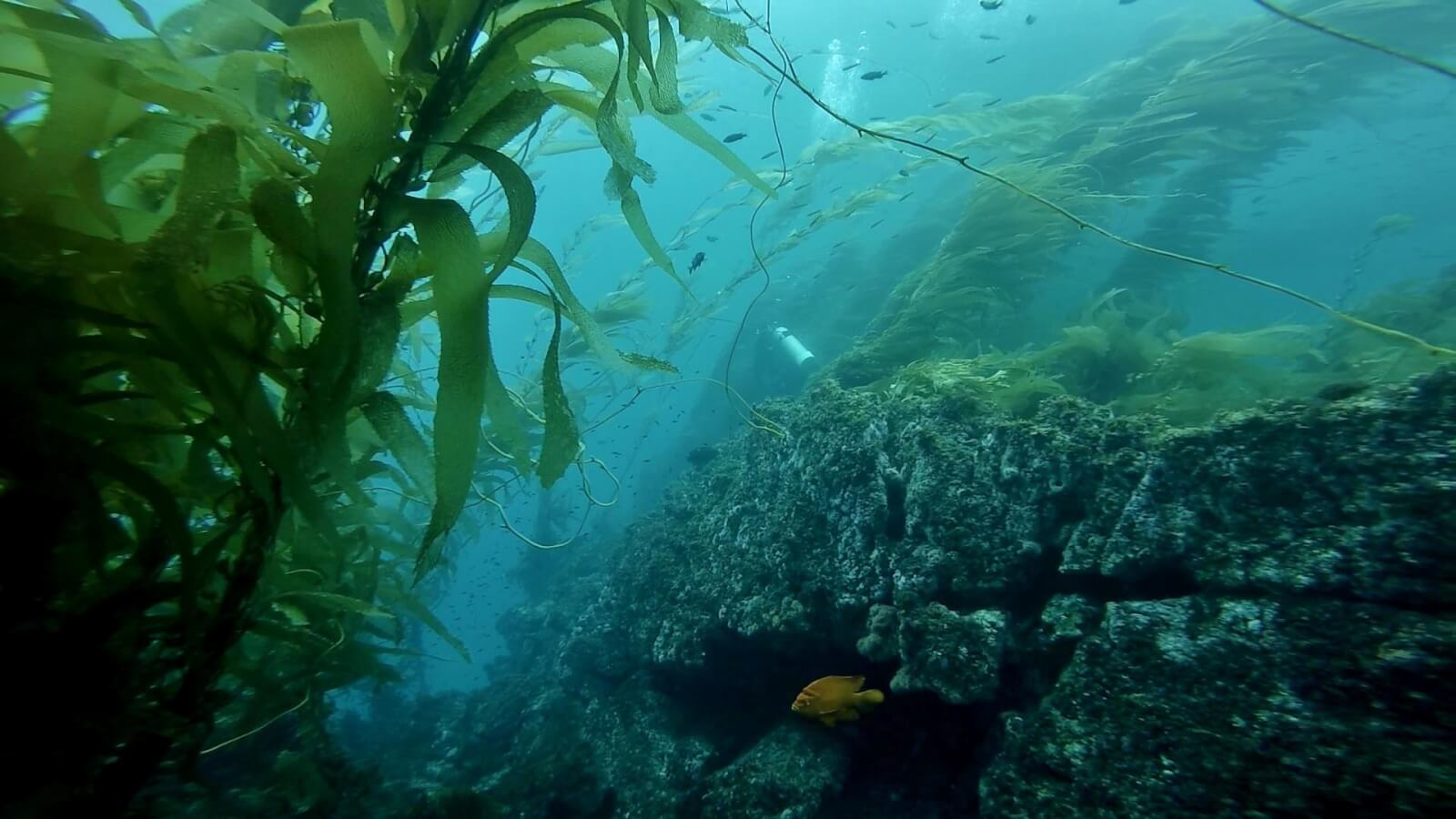 Diving at the channel islands