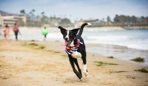 ventura beach dog friendly