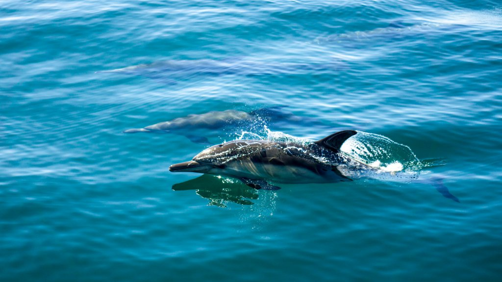 Dolphin at the islands