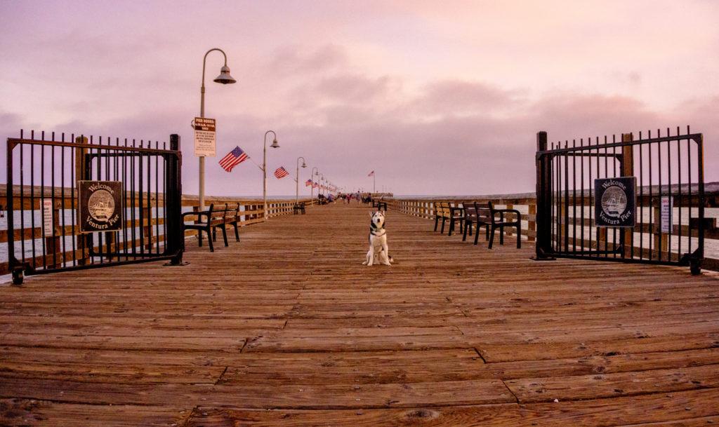 dog on Ventura pier