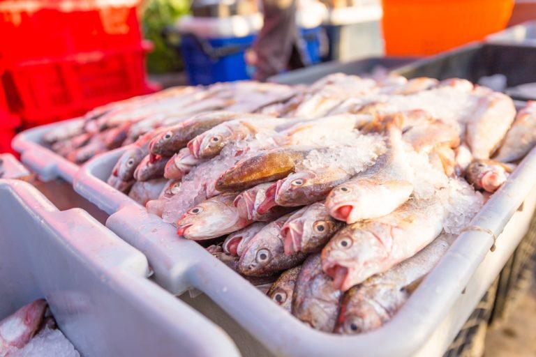 Ventura Fishermans Market Ventura Harbor