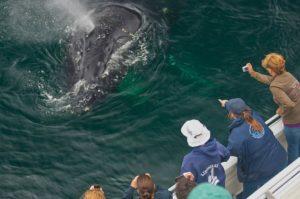whale watching channel islands ventura