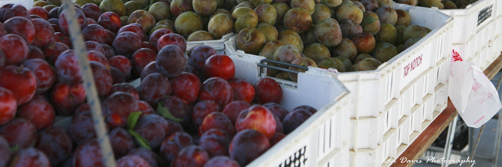 Farmers-Market-VCCFM_plums_and_nectarines