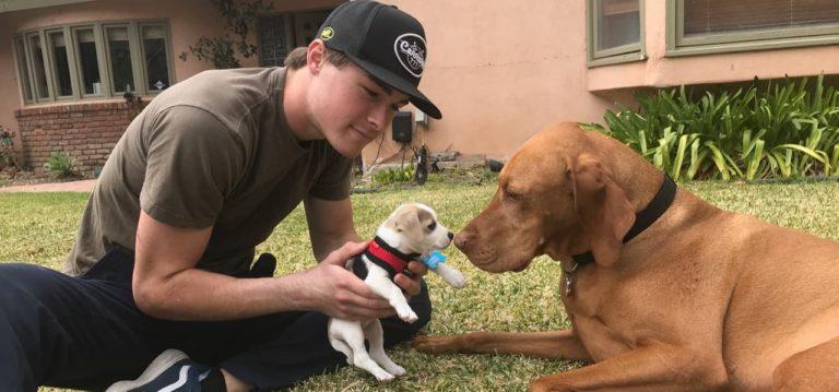 Vizsla dog in Ventura California