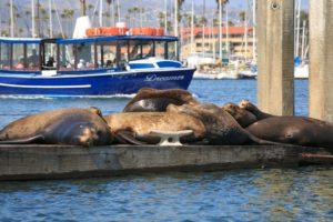sea lions ventura harbor village