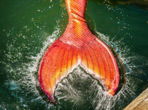 mermaid month makes a splash ventura harbor village